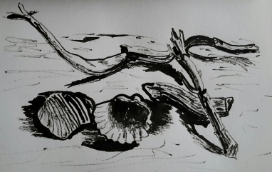 driftwoodshellink