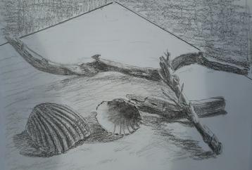 driftwoodshells